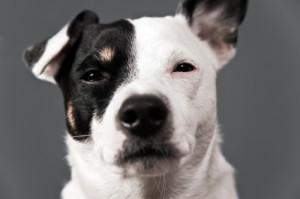 vétérinaire ostéopathe