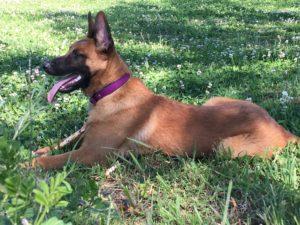 ostéopathe chien toulouse
